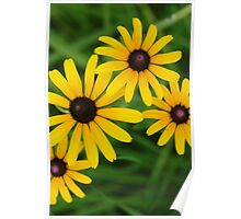 Black eyed Susans by bs hilton Poster