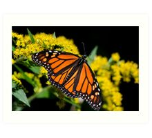 Orange Monarch Butterfly Art Print
