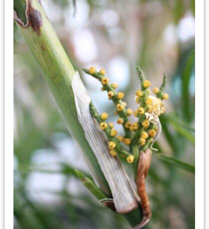 Macro Flowers Sticker