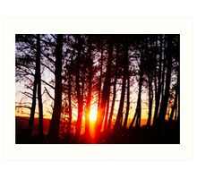 sunglow on woods Art Print