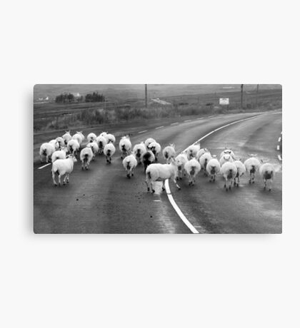 Traffic Jam - Donegal Style Metal Print