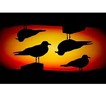 Sunset Quartet Photographic Print