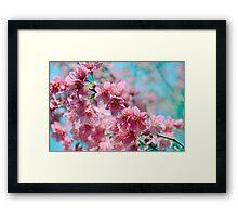 Plum Blossom 3 Framed Print