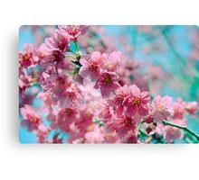 Plum Blossom 3 Canvas Print
