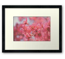 Plum Blossom 4 Framed Print