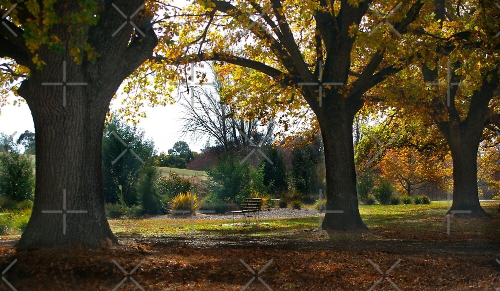 Autumn Afternoon in Kyneton, Victoria by haymelter