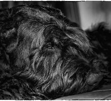 Portrait of black dog by andreisky