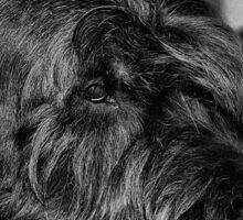 Portrait of black dog Sticker