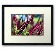 Going Going Gone To Seed Framed Print
