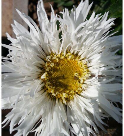 shiney Flower Sticker