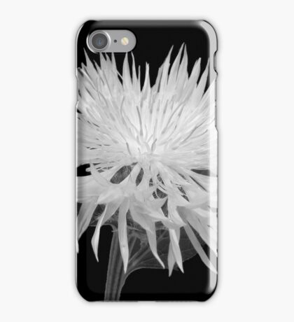 Bachelor Button in Black & White iPhone Case/Skin