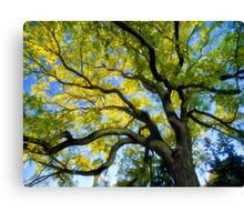 The Tree Canvas Print