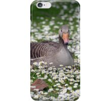 duck among daisies in fota wildlife park near cobh iPhone Case/Skin