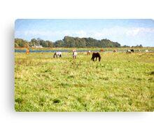 Horses grazing at Hiddensee Canvas Print