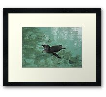 Enjoying the Water Framed Print