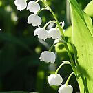 Lily-Of-The-Valley by Martha Medford