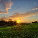 Dream of Daylight by Vicki Field