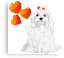 Valentine card with a dog Maltese Canvas Print