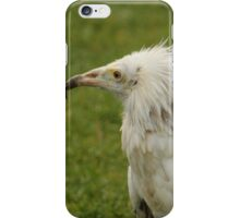 Egyptian Vulture iPhone Case/Skin