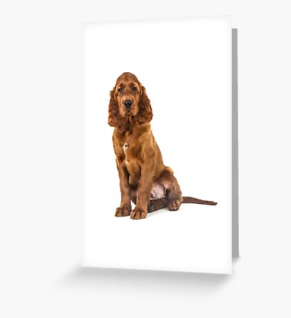 Irish Setter puppy Greeting Card