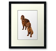 Two Irish setters Framed Print
