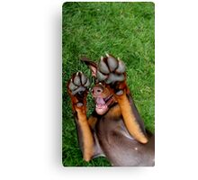 Oh Pawsome Canvas Print