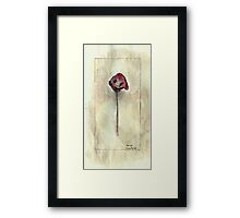 Papaver Framed Print