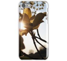 Dogwood in Bloom iPhone Case/Skin