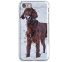 Irish setter playing in snow iPhone Case/Skin