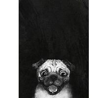 Snuggle Pug Photographic Print
