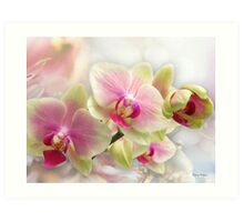 Exquisite Orchid Art Print