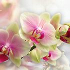 Exquisite Orchid by Morag Bates