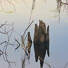 Florida Reflections--Winter by Imagery