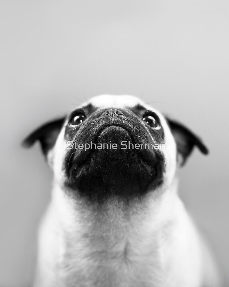Pondering Pug by Stephanie Sherman