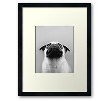 Pondering Pug Framed Print