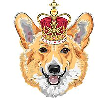 Pembroke Welsh corgi in gold crown Photographic Print