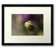 Flower Bud Close-Up Framed Print