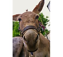 DONKEY - MAKE AN ASS OF YOURSELF Photographic Print