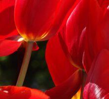 Sunny Tulips Sticker