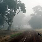 Lonely Road, Edenhope, Victoria. by Diana-Lee Saville