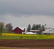 Golden Meadow, Amish Country, Ohio. by Billlee