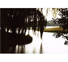 Willow Silouette Photographic Print