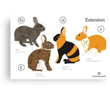 Rabbit colour genetics - Extension gene Canvas Print