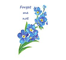 Forget Me Not Blue Flower Quote Photographic Print