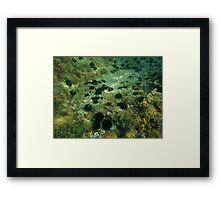 Diving (sea urchins 2) Framed Print
