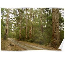 Joe Mortelliti Gallery - Big Hill Track, Otways Forest, Victoria, Australia. Poster