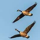 Spring Is Here Said The Geese by Thomas Young