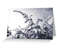 Winter - cold light (2011) Greeting Card