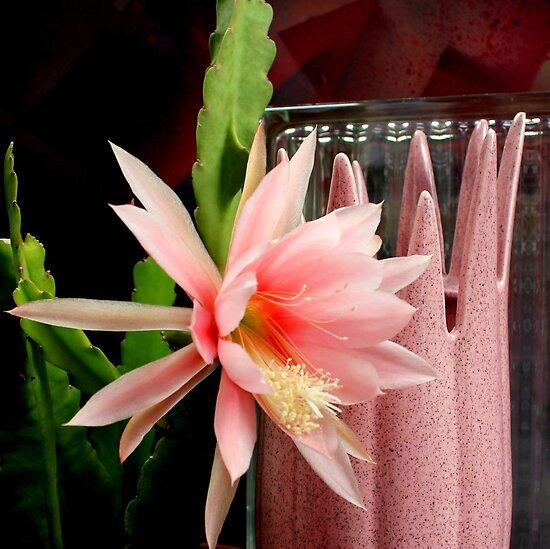 Pink Petal Pushers by Michael May