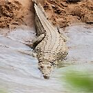 HUNGRY ? - THE NILE CROCODILE - Crocodylus niloticus by Magriet Meintjes
